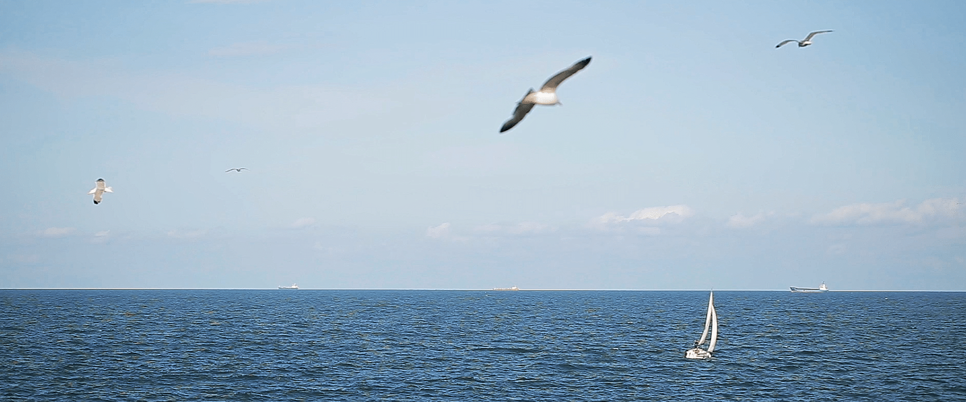 Black sea with birds and boat