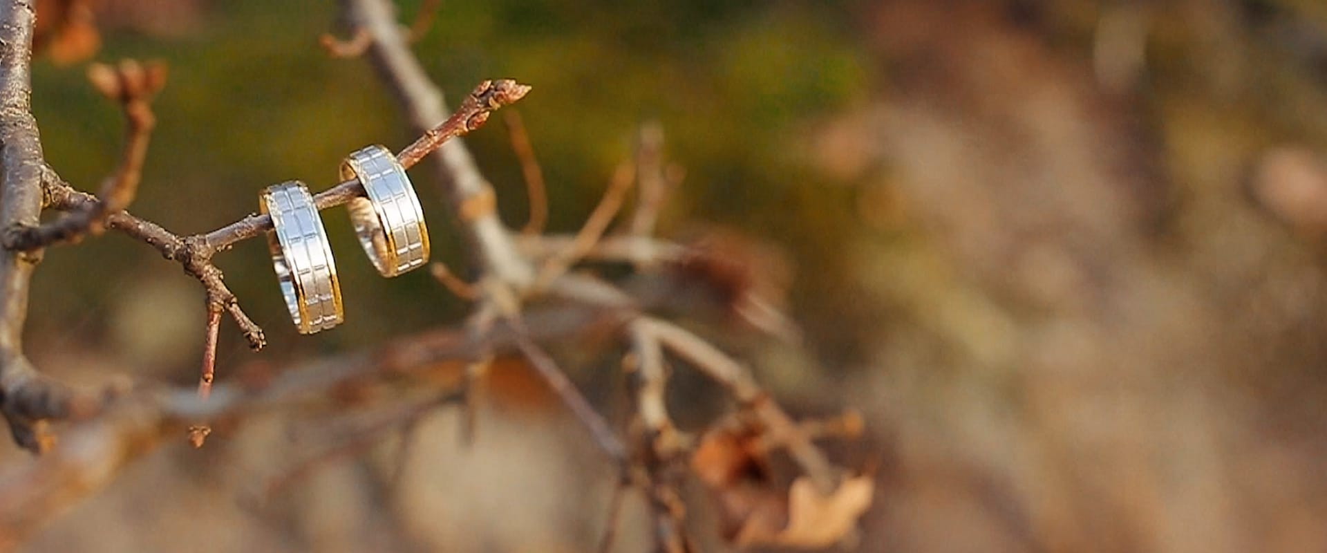 Wedding rings on branches - autumn wedding
